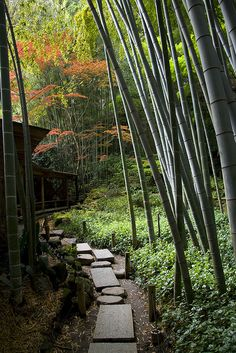 Bamboo gardens at the 600 year old temple in Kamakura…. Bamboo gardens at the 600 year old temple in Kamakura. Bamboo gardens at the 600 year old temple in Kamakura…. Kamakura, Garden Paths, Garden Landscaping, Landscape Design, Garden Design, Japanese Tea House, Japanese Gardens, Asian Garden, Japanese Tea Ceremony