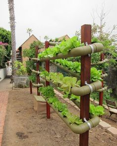 Have you heard of aquaponics? Aquaponics Combines the Growing of Fish and Plants You may grow plants in water and without soil and once one does this together with growing fish you are practicing aquaponics. Hydroponic Farming, Aquaponics Greenhouse, Aquaponics System, Indoor Aquaponics, Hydroponic Growing, Aquaponics Fish, Fish Farming, Vegetable Garden Design, Veg Garden