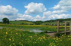Golf Courses, Vineyard, Tourism, Let It Be, Website, Outdoor, Beautiful, Outdoors, Vineyard Vines