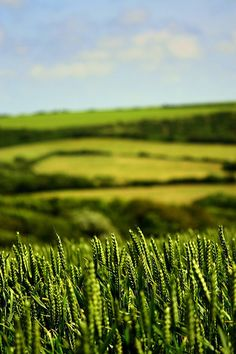 Beauty of life, via Flickr. taken on the Isle of Wight, UK love the way the background is blurred