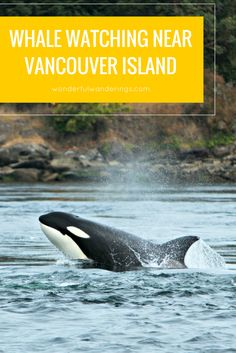 One of THE things to do at Vancouver Island in Canada is to go whale watching. Click to read or pin to save for later.