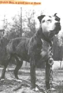 Site about American Pit Bull Terriers Game Bred Pitbulls, Pit Dog, Black Pitbull, Dog Line, American Pitbull, Bully Dog, Dog Games, Dog Fighting, Old Dogs