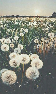 Image via We Heart It https://weheartit.com/entry/173778419/via/29921618 #flowers #hipster #nature #scenery #sky #sun #Sunny #wallpaper