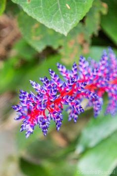 Jardin La Mortella - Ischia Batch Cooking, Nature, Menu, Italy, Sweet, Gardens, Sun, Green, Plant