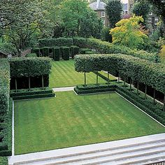 """love the """"hedge"""" of trees. hornbeams, maybe?"""