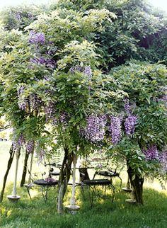 beautiful wisteria table