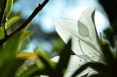 Such a tranquil garden. Photo by: Renate Engelbrecht Pretoria, Plant Leaves, Around The Worlds, Marketing, Garden, Plants, Photography, Image, Garten