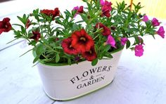 Donica Flowers & Garden a - BelleMaison.pl