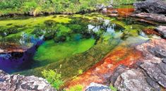 For A Few Weeks Every Year, This Colombian 'Rainbow' River Erupts In Vivid Color. Rainbow River, Liquid Rainbow, Angel Protection, Mind Blowing Images, All Inclusive Trips, Rio, Natural Wonders, Day Trip, Cool Places To Visit