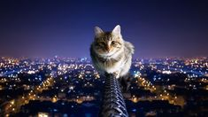 Fearless kitty is, well, fearless. L - Oh noes. This photo makes me all nervous like I'm looking over the edge of the building myself. Please get down, kitty. Funny Cats, Funny Animals, Cute Animals, Diy Funny, Baby Animals, Crazy Cat Lady, Crazy Cats, Hate Cats, Cool Cats