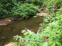Limbochromis robertsi biotope