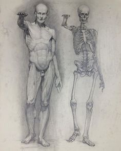 Exceptional Drawing The Human Figure Ideas. Staggering Drawing The Human Figure Ideas. Human Figure Drawing, Figure Sketching, Figure Drawing Reference, Anatomy Reference, Anatomy Study, Human Anatomy Drawing, Body Drawing, Life Drawing, How To Draw Anatomy