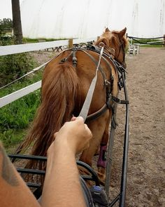 First time ever trying my horse in front of actual carriage and I even drove her…
