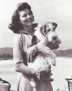 Ava Gardner with fox terrier