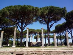I have a feeling you'll like this one  Umbrella pines and Temple of Jupiter, Ostia antica https://mybotanicalgarden.wordpress.com/2017/06/08/umbrella-pines-and-temple-of-jupiter-ostia-antica/?utm_campaign=crowdfire&utm_content=crowdfire&utm_medium=social&utm_source=pinterest