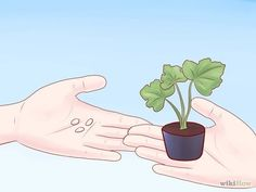 Comment cultiver des courgettes: 10 étapes