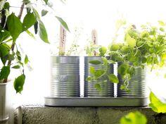 Nu grönskar det på fönsterblecket! Med FRÖER odlingsset har du alltid färska örter till matlagningen. I setet ingår krukor, fat, jord och fröer.