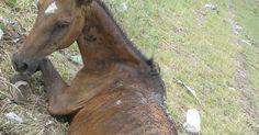 Encuentren al responsable de torturar y dejar morir a un caballo FIRMA Y COMPARTE ESTA PETICIÓN...
