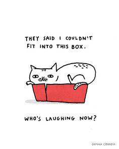 box kitty by gemma correll, via Flickr