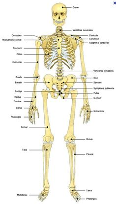 Anatomie atlas du corps humain squelette how to teach classical high school science Technology World, Medical Technology, Science And Technology, Technology Innovations, Technology Articles, Human Skeleton Anatomy, Online High School, Medical Laboratory Science, Human Body Parts
