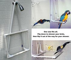 pvc parrot stands - Google Search