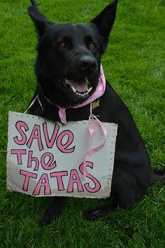 2013 Chicago Avon Walk for Breast Cancer