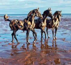 Driftwood Horse Sculptures - amazing                              …