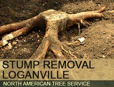 Stump Removal Loganville