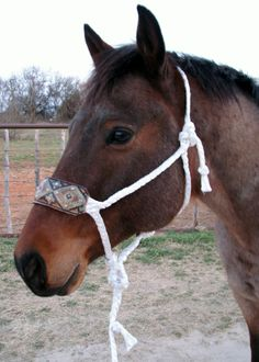 Mule tape halter with Aztec leather noseband by Running Roan Tack. http://www.runningroantack.com