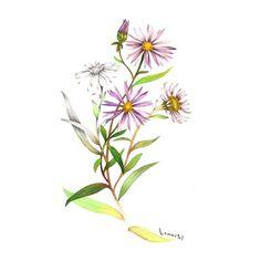 "45 Likes, 5 Comments - Illustrator ranyoung_Baek🎨 (@ranyoung_b) on Instagram: ""좀개미취 깊은산계곡에 피어나는 자주빛 여러해살이풀 #illustration #일러스트 #drawing #watercolor #수채화 #pencil #wildflowers #야생화…"""