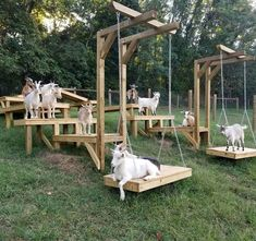 Goat playground! This looks like a super simple setup that would be fun for heaps of different animals, as well as kids! The Farm, Mini Farm, Small Farm, Goat Playground, Goat Toys, Goat Shed, Goat Shelter, Goat Care, Dwarf Goats