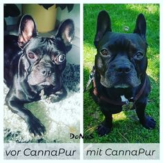 Hilf deinem Hund auf natürlicher Basis