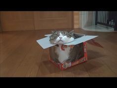 In Which Maru Transcends The Very Concept Of Box