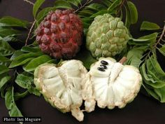Sugar Apple/Sweetsop/Anon (Annona squamosa). The sugar apple is an exquisite fruit that is very closely related to the cherimoya. The fruit are typically baseball to softball size, and they taste like sugary sweet custard. The pulp comes apart in segments each containing a small black seed that separates easily from the fruit.