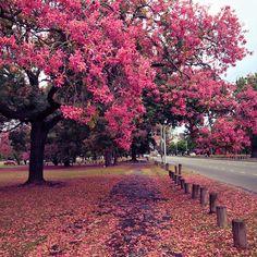 Bosques de Palermo. Buenos Aires, Argentina