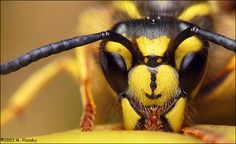 Are you ready for your closeup, Mr. honey bee? : )