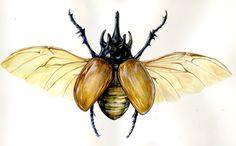 Horned Beetle by bigredsharks on deviantART Beetle Drawing, Rhino Beetle, Beetle Tattoo, P Tattoo, Insect Tattoo, Plant Tattoo, Simple Line Drawings, Beautiful Bugs, Art Walk