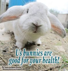 14 reasons why rabbits are good for your health!