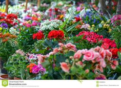 Flowers in Garden stock photo. Image of natural, colored - 83896824 Stock Photos, Garden, Vectors, Nature, Flowers, Plants, Sign, Image, Beautiful