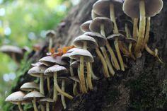 Paddenstoelen van onder gefotografeerd in het bos