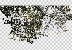 view from by Gobotree, including cutout plants, tree, branch