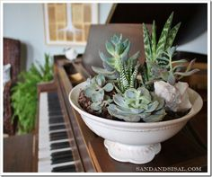 footed bowl planted with succulents