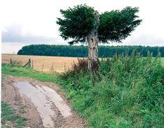 Eibe, Wiltshire (1992)