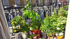 ¿No sabés qué plantas poner en tu balcón? Te damos algunos consejos  ¡Ponele onda a tu balcón con plantas de muchos colores y flores!.         Foto:Gentileza www.appartmenttherapy.com