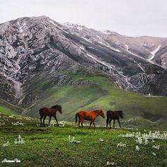 "The beautiful and stunning landscape of ""Gilan Province - North of Iran"" (Persian: چشم اندازهای طبیعت بکر گیلان) Credit: Arman Por Basiriyan"