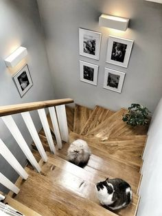 Spotkanie na szczycie 😉tylko takich życzę Wam na ten tydzień ☺️😘 . Home Stairs Design, Interior Stairs, Home Interior Design, House Design, Gallery Wall Staircase, Modern Staircase, Cottage Hallway, Hallway Inspiration, Staircase Makeover