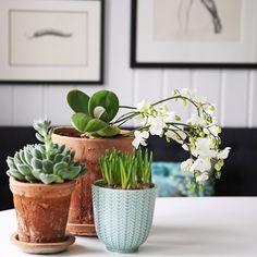 Purodeco Feng Shui on Instagram #greenplants #purodecohome