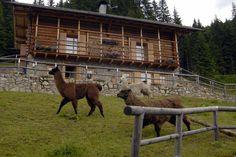Vivere la natura del Trentino durante le tue vacanze di charme. #trentinocharme #sanmartinodicastrozza Horses, Mountains, Climbing, Glamour, Horse, Bergen