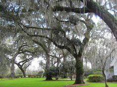christ church st simons island | Images of Christ Church, Saint Simons Island - Attraction Pictures ...