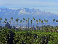 California Citrus State Historic Park by danorth1, via Flickr